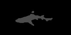 Dogfish Boats Logo